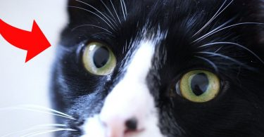 how-cats-see-the-world