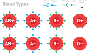 blood-types-1-wide-300x185.png