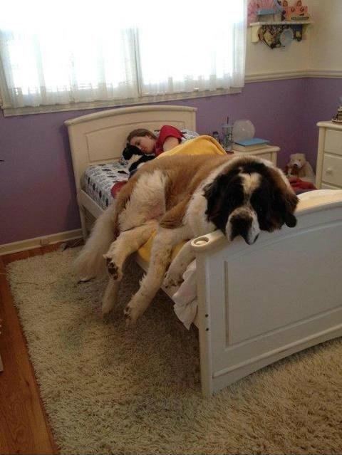 O cachorro que só quer tirar uma sonequinha: