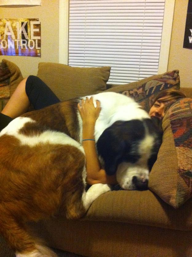 O cachorro que só precisa tirar um cochilo antes de sair: